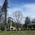 Crown Reduction; Topping a Tree the Right Way