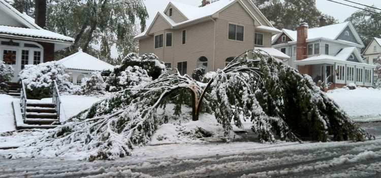 "Are your Tree's Safe After ""Snowtober""?"