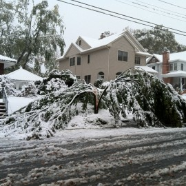 """Are your Tree's Safe After """"Snowtober""""?"""