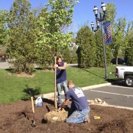 Arbor Day 2013: A Tale of Two Trees