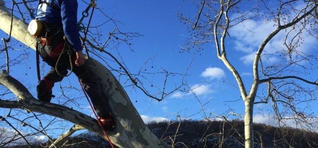 About Vanderbeck Tree Experts